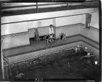 1945: Women swimming