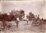 1905: Cadets spraying peach trees