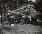 1939: Spring scene under a dogwood tree 1