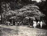 1939: Spring scene under a dogwood tree 2