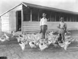 E. C. Bledsoe and Ira D. Vail with White Leghorns, 1928