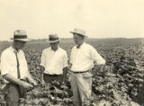 County agent and farmers in cotton field, Barbour County, 1926