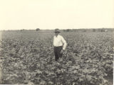 J. T. Gresham's cotton field, Autauga County
