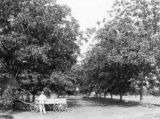 L. M. H. Whestone spraying pecan orchard