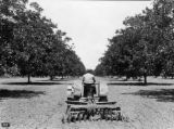 Kilpatrick on tractor in pecan orchard in Dallas Co., Ala. 1