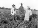 County agent J. E. Bonner and farmer C. H. Hearn examine pasture grown in Ward