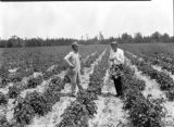Charley Green and county agent  H. H. Williamson in field of Irish potatoes in Escambia County,...
