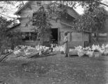 Mrs. Van Ross D. Smith's White Leghorns in Mobile County, Alabama