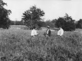 W. R. Turnipseed (left), W. M. Burt, and B. J. Burt (right) stand in a prize field of oats and...