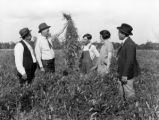 County agent J. E. Bonner showing a group of people the growth of vetch