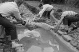 1948: API Pi Kappa Alpha members dunking a member in the fish pond