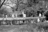 1950: API Pi Kappa Alpha members playing volleyball outdoors