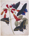 Watercolor 01: Swallowtail butterflies on trumpet creeper