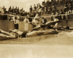 Military swim meet: start of a race, Hawaii, 1930s 2