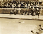 Military swim meet: swimmer finishing race, Hawaii, 1930s 2