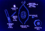 [Variation in Cell Types]