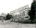 1924: Comer Hall with grazing cattle