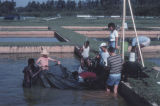 1980s: Fisheries research pond