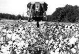 1970s: Picking cotton with a machine